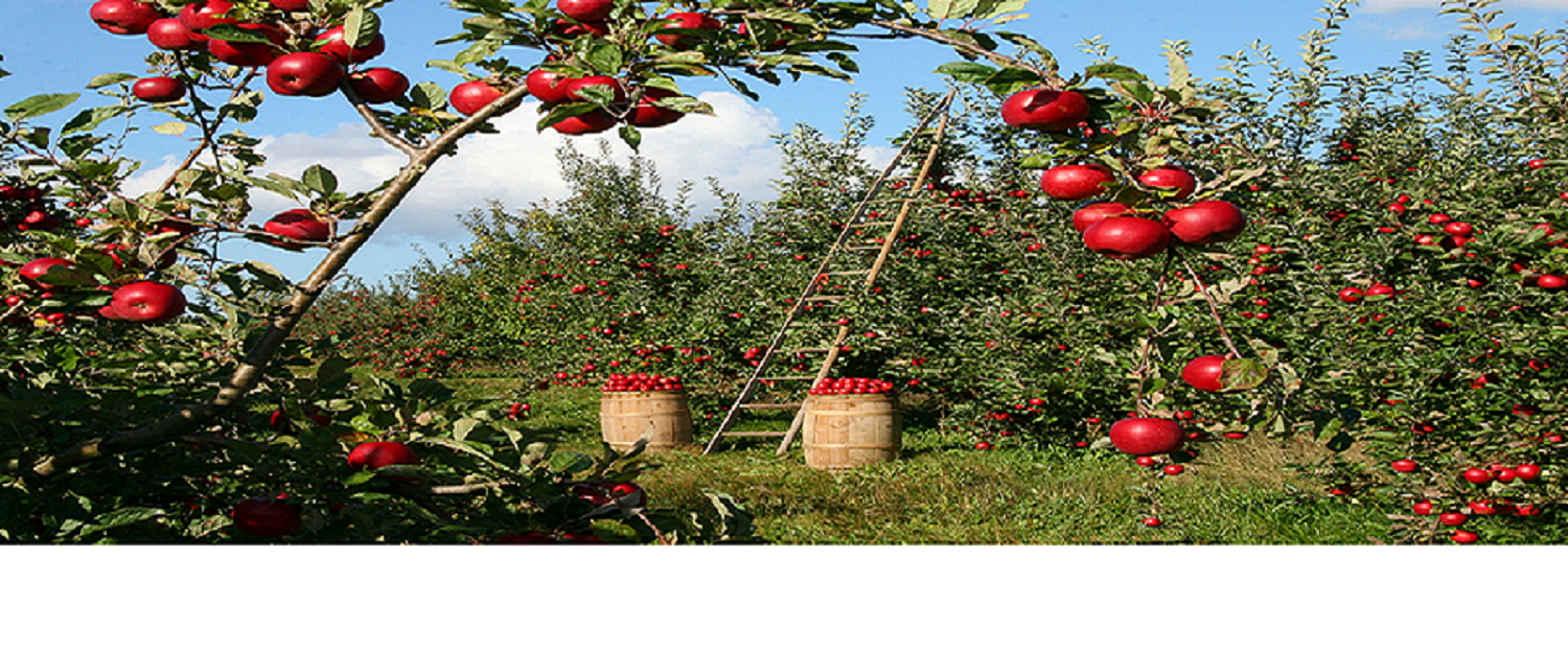 APPLE ORCHARD HEADER RESIZED #2
